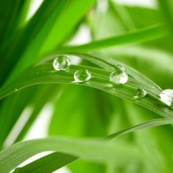 Écologie et propreté